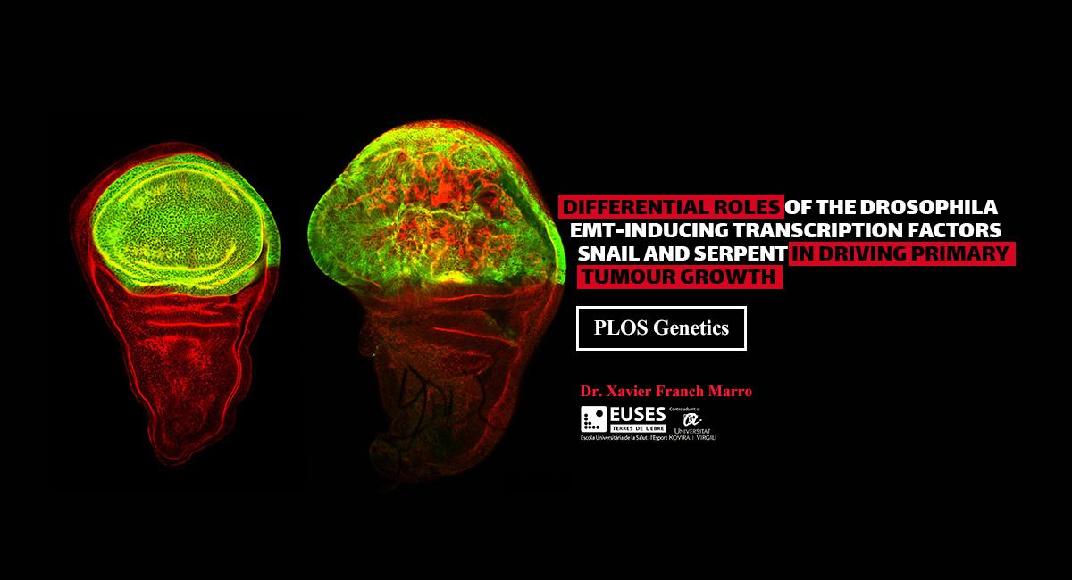 El professor d'EUSES-URV Dr. Xavier Franch Marro, participa en un important estudi que conclou que els mateixos gens poden provocar un tumor i la seva metàstasi