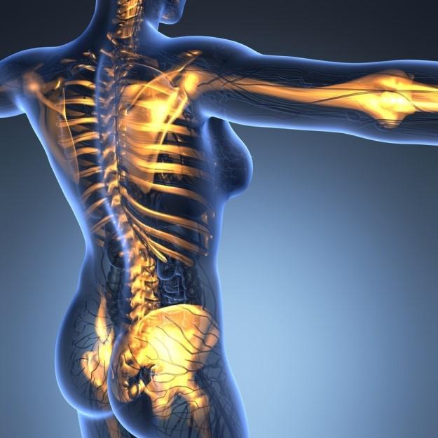 La traumatologia, una de les disciplines del Grau en Fisioterapia d'EUSES-URV