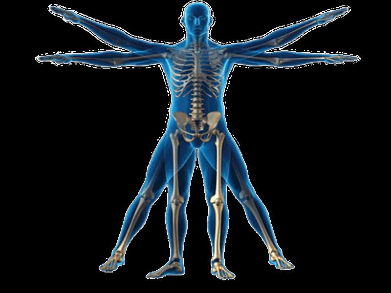 Què és la Cineantropometria i perquè serveix?